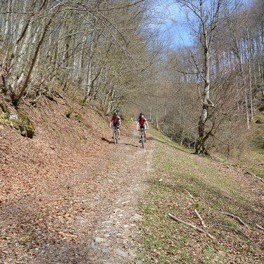 Cicloturism Adrenalina Padurea CRaiului T