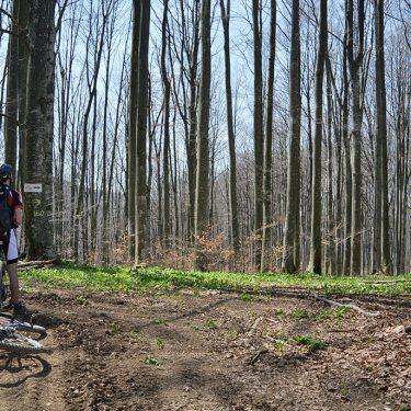 Cicloturism Padurea Craiului Bratca T