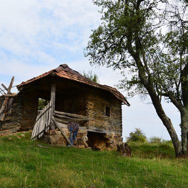 Cicloturism Padurea Craiului Damis T
