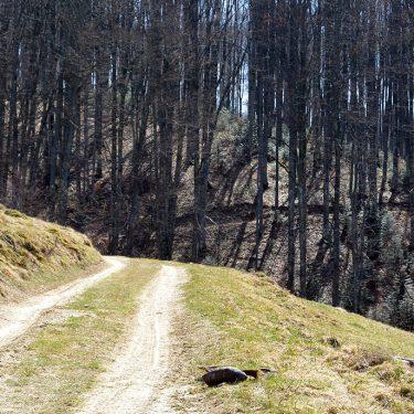 Cicloturism Padurea Craiului Valea Misidului T
