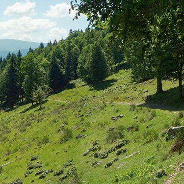 drumetie padurea craiului coada lacului stana de vale peisaj