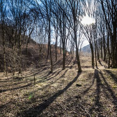 Alergare montana in Padurea Craiului Suncuius Traseul Misidului