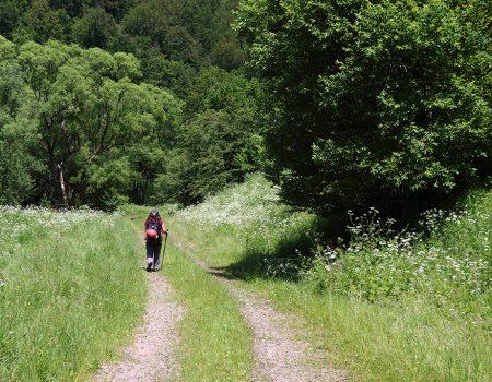 Alergare montana in Padurea Craiului Traseul Misidului 1