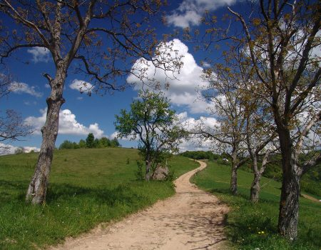Alergare montana in Padurea Craiului runcuri traseul colinelor