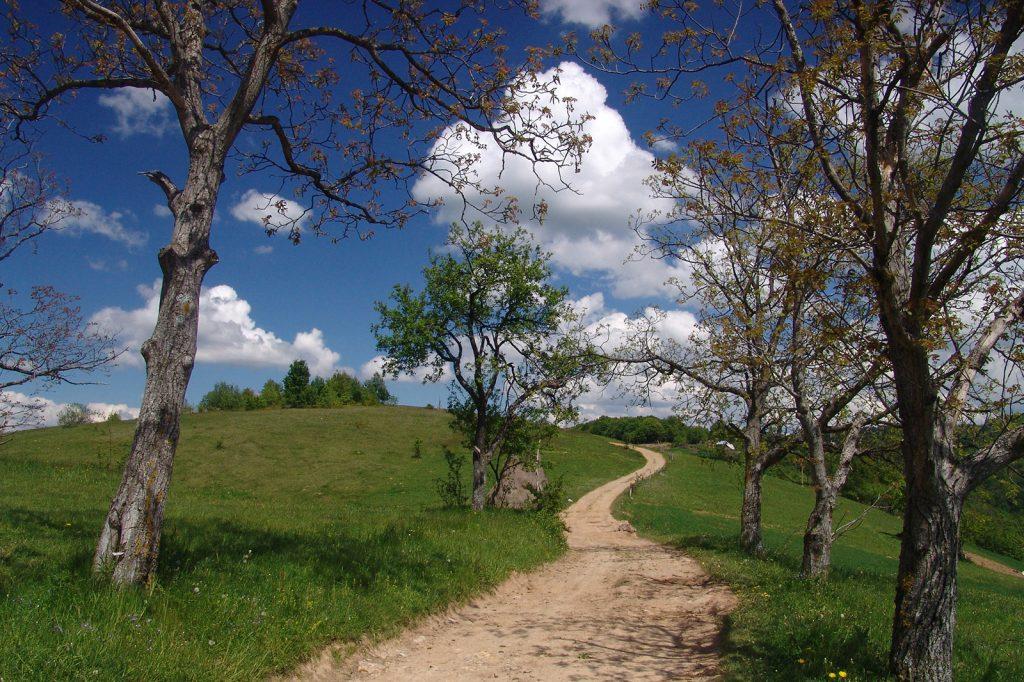 Alergare montana in Padurea Craiului runcuri traseul colinelor featured