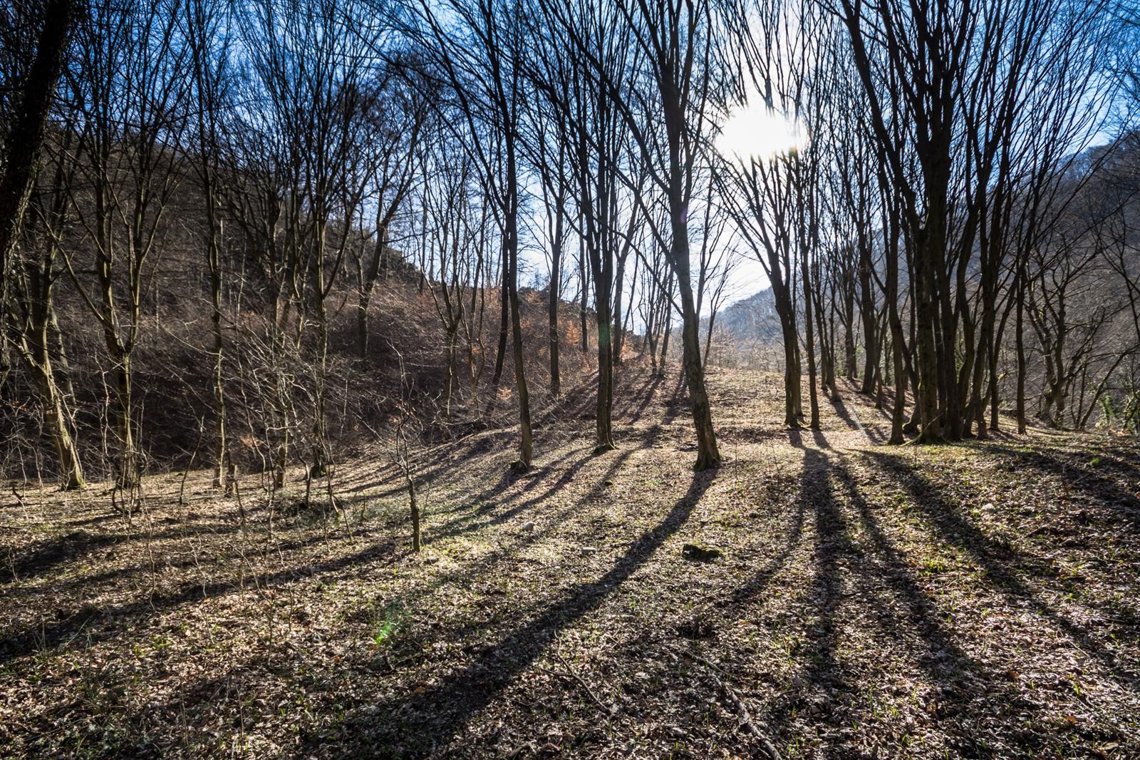 Traseul Miridului