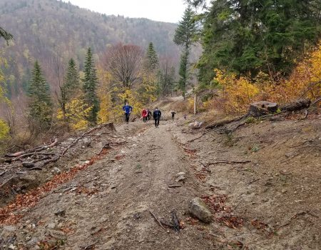 Alergare montana in Padurea Craiului valea iadului traseu albastru featured