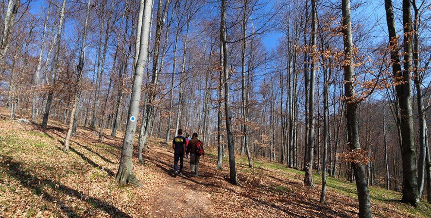 Drumetie Padurea Craiului pestera cu cristale Farcu stanu carnului punct albastru