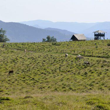 Drumetie Valea Iadului observator creasta bulz