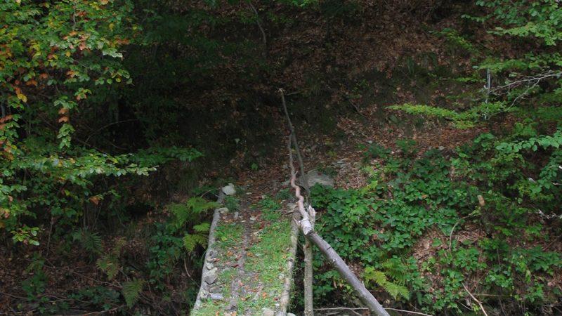 Padurea Craiului Valea Bratcutei