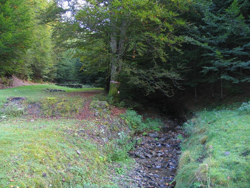 Padurea Craiului Valea Bratcutei Valea Crisului Repede