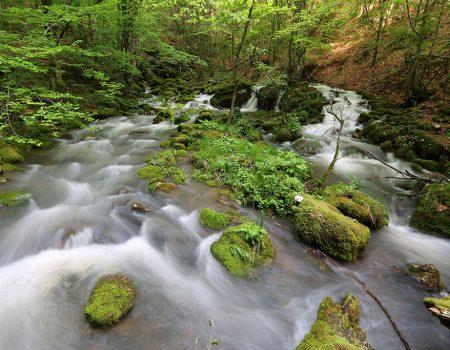Padurea Craiului Valea Rosia Izbuc Rosia