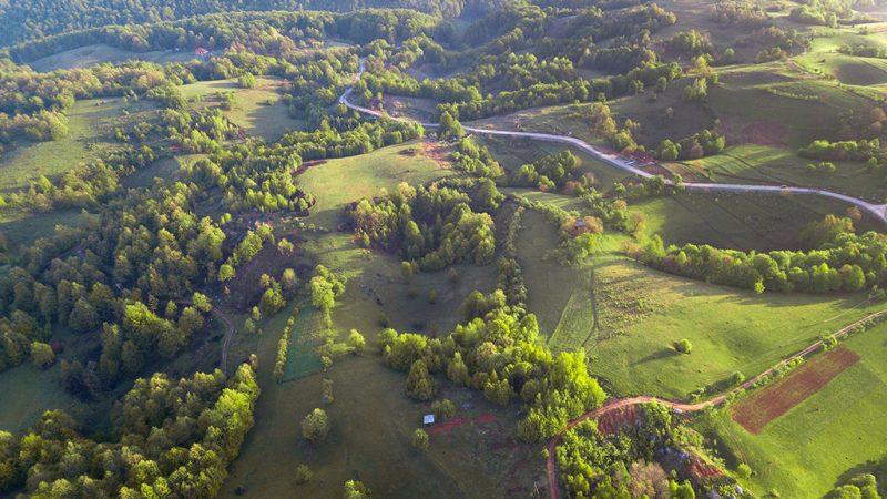 Padurea Craiului Valea Rosia Runcuri