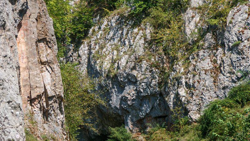 Padurea craiului cheile cutilor valea rosia