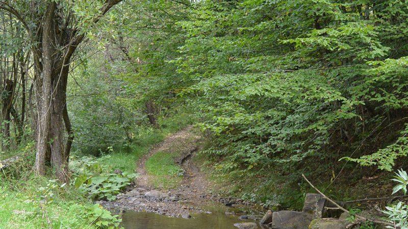 Padurea craiului cheile misidului valea crisului repede