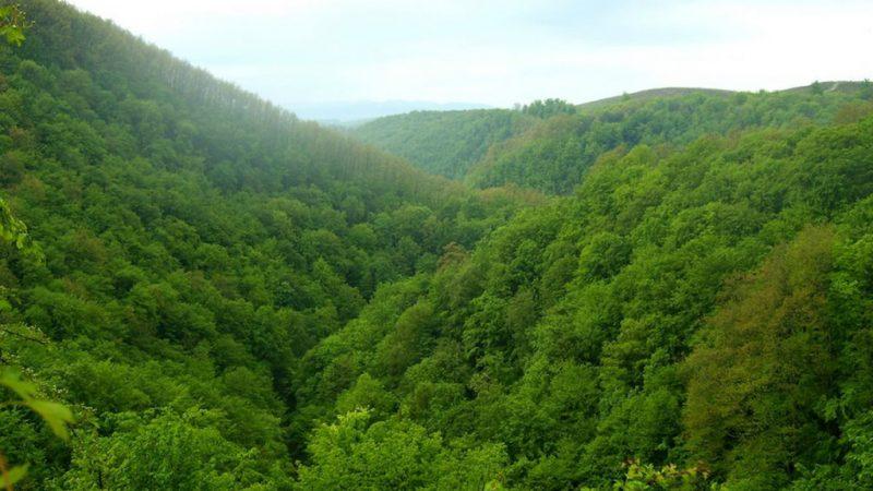 Padurea craiului cheile videi valea vida