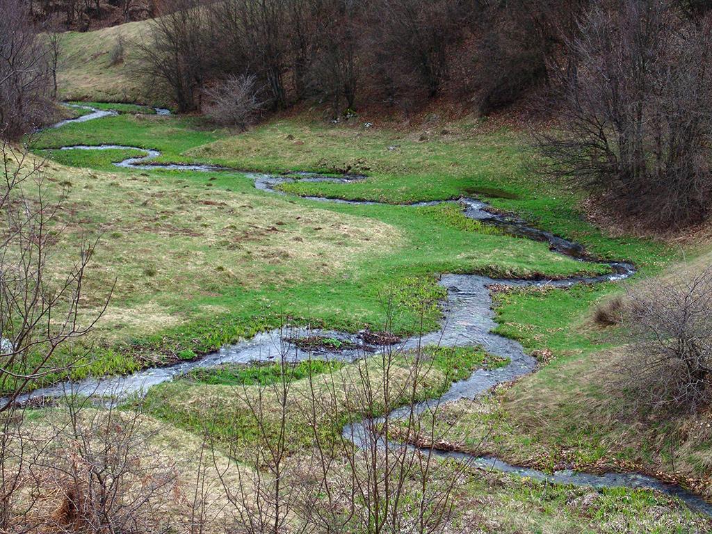 Padurea craiului ponorul runcsor valea rosia