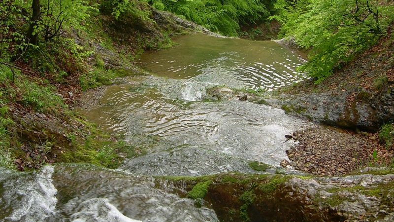 Padurea craiului valea boiului valea crisului repede