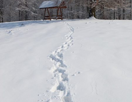 drumetie iarna in padurea craiului circuit cheile lazurilor