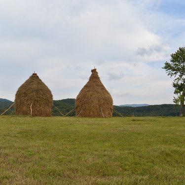 Cicloturism Padurea Craiului Valea Rosia T
