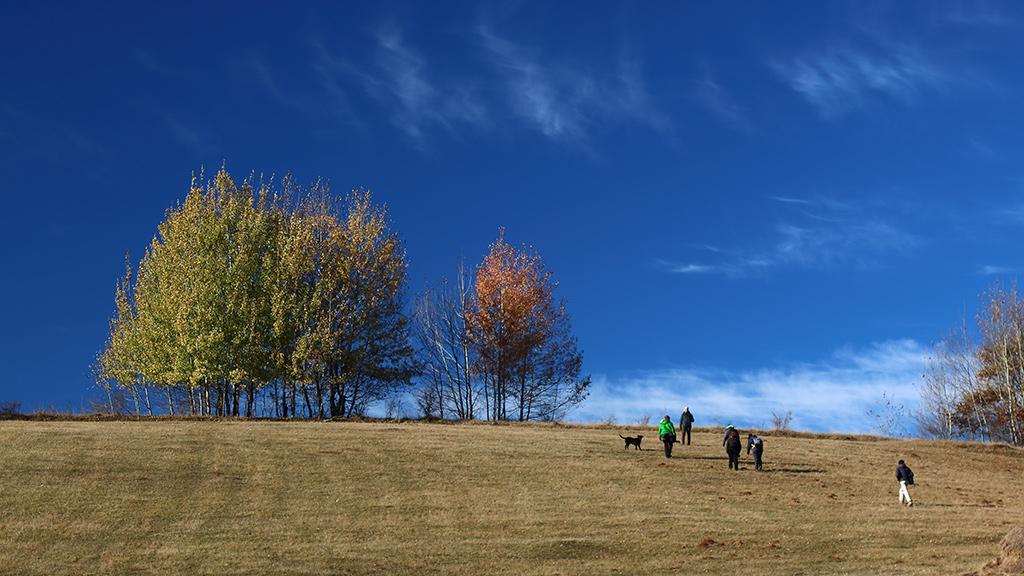 Padurea Craiului Valea Rosia drumetie
