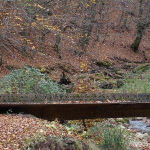 Padurea Craiului drumetie toamna pe Valea Boiului